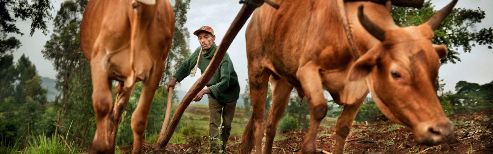 Koffieboer in Ethiopië