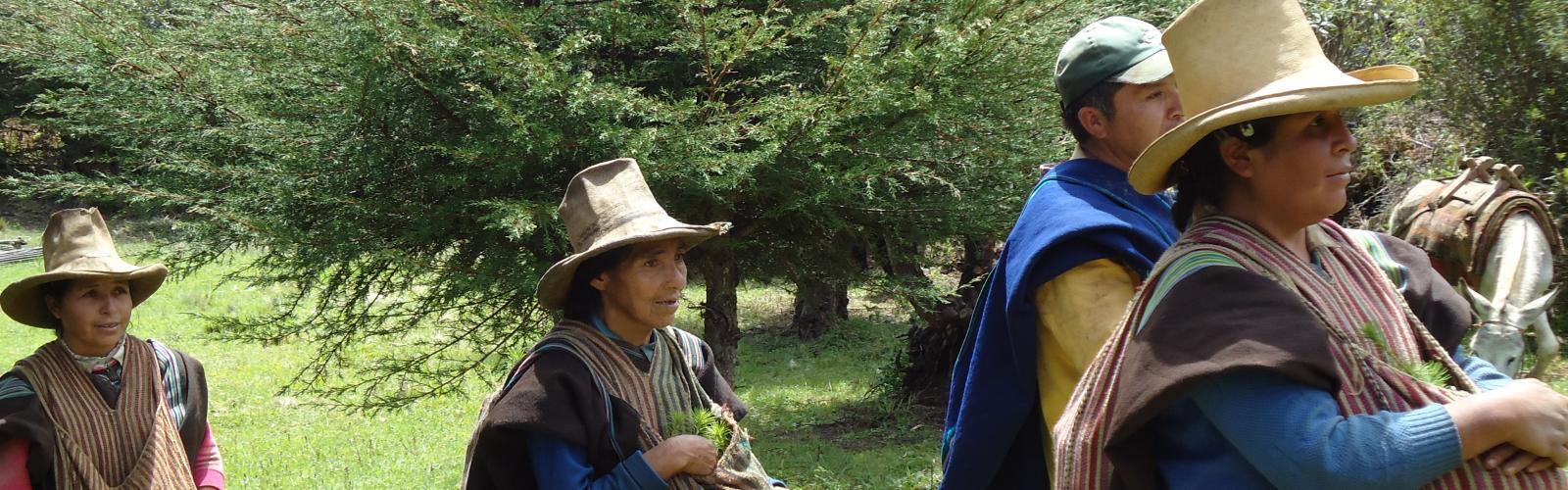 Banner vrouwen met bomen in Peru
